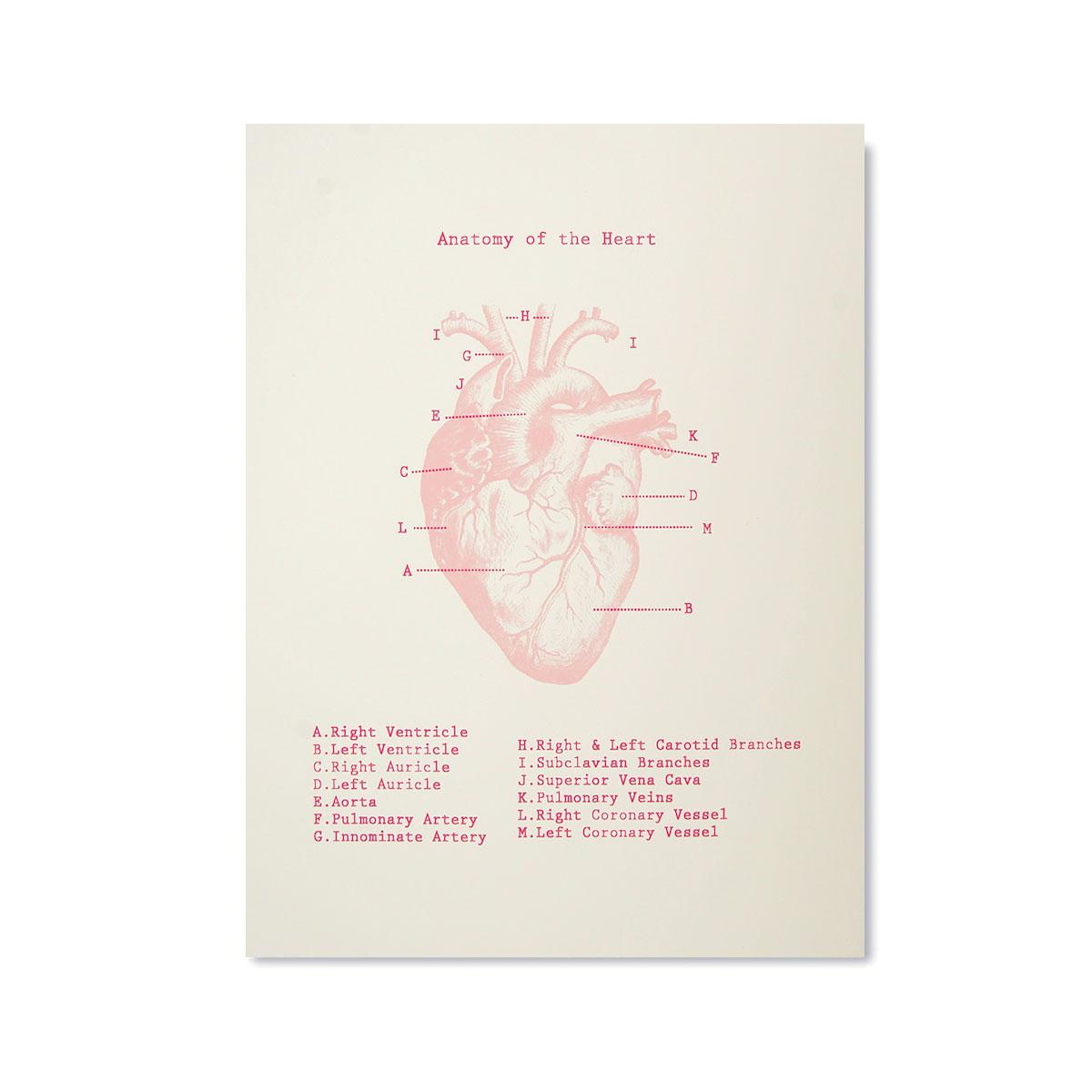 Kid Icarus -POSTER- Anatomy of the Heart